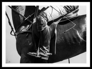 Horse studio, horse portrait, Equestrian, equestrian photography, equine photo, equine photography, horse photographer, equestrian photography bw, equestrian photography black & white, black & white photography, photography art, equestrian photography art, horse photography, horse, häst foto, Philippa Davin photography, Philippa Davin foto, equestrian inspiration, , black & white photo, bw horse photos, Philippa Davin photo, equestrian bw photography, equestrian black & white photography, equestrian black & white photo, fine art photography, equestrian fine art photography, fine art photo, fine art bw photography, fine art bw equestrian photography, philippa davin photo, polo fine art, horse art, equine art