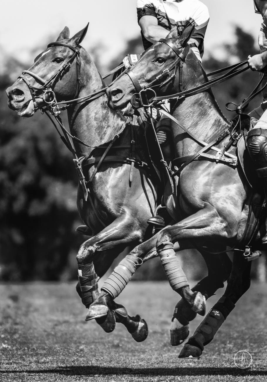 Polo twins
