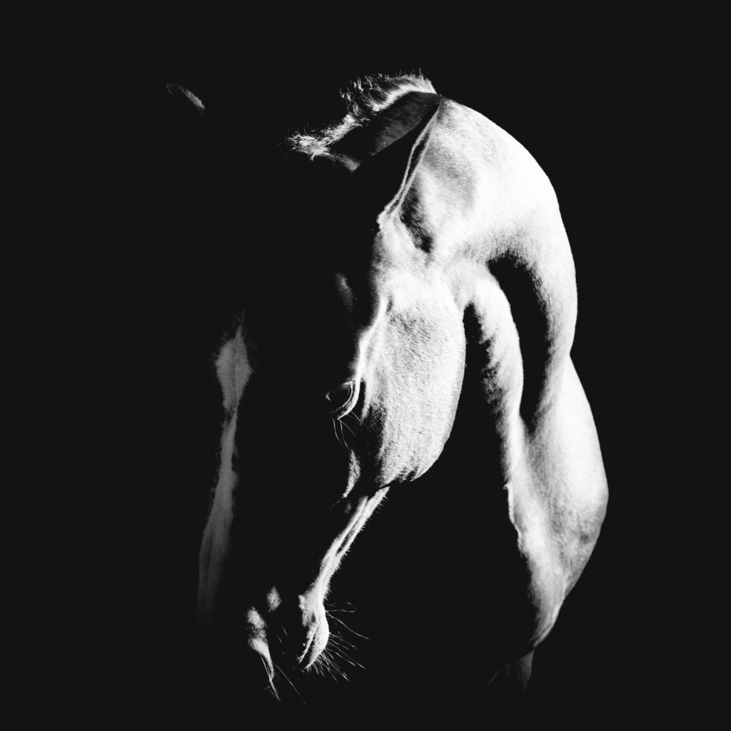 Mystery - fine art horse photography