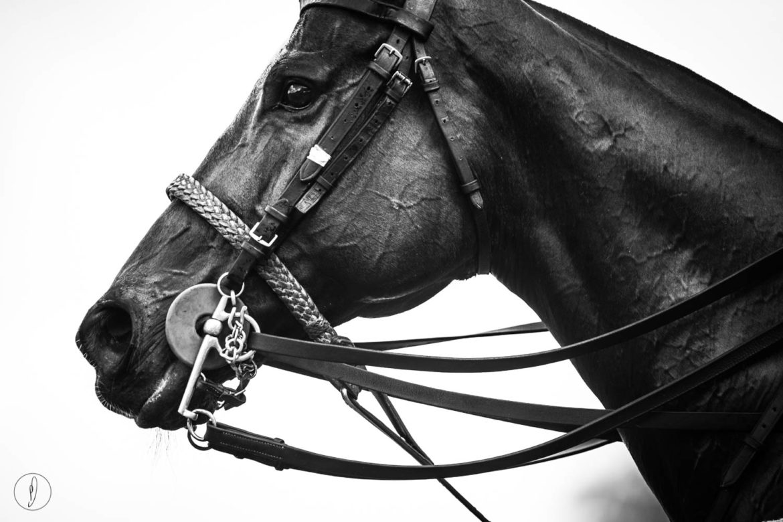 Philippa Davin Equestrian Fine Art Horse photography