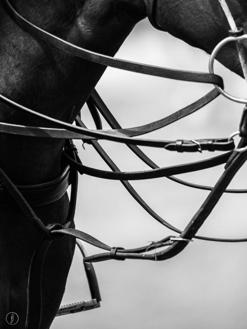Equestrian fine art photography