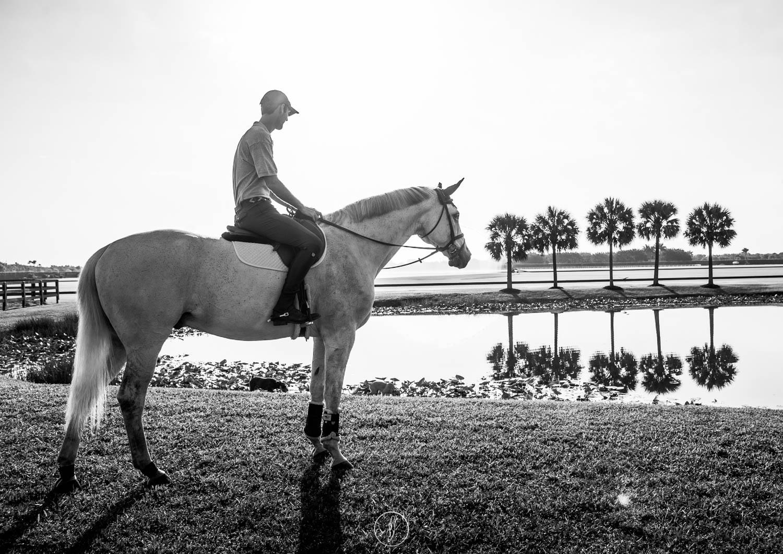 Philippa Davin Equestrian art