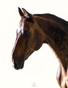 Philippa Davin Equestrian Fine Art
